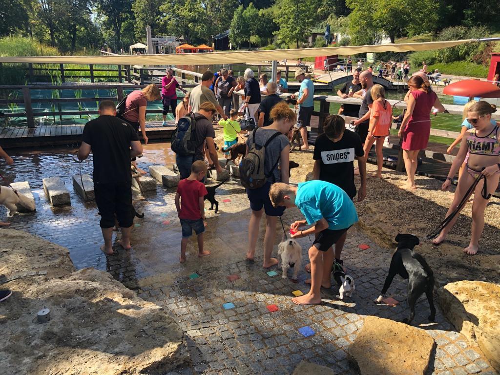 Hundeschwimmen 2019 mit Welpenschule